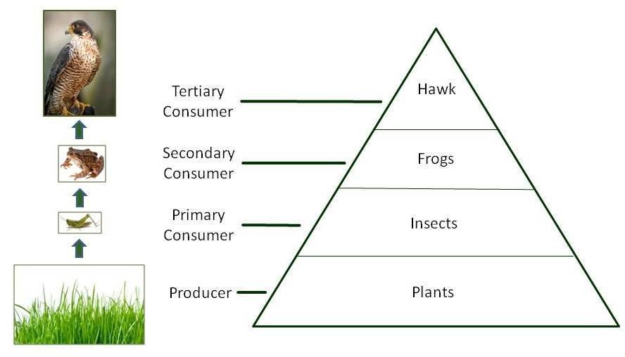 Worksheet Place Desert : Energy pyramid thinglink