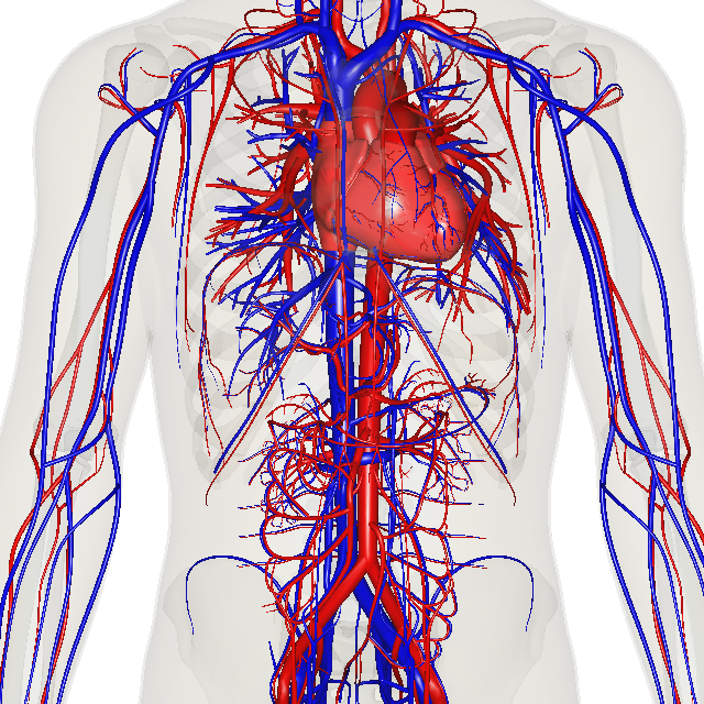 circulatory system map and diagram