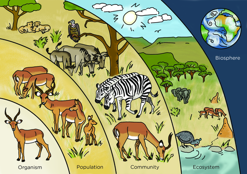 Organism- one animal (living- gazelle), Population- more ...