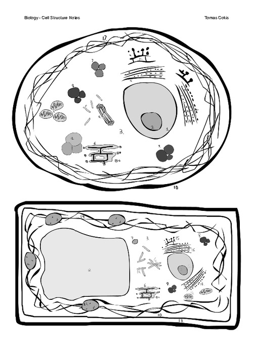 eukaryotic animal cell coloring pages - photo#25