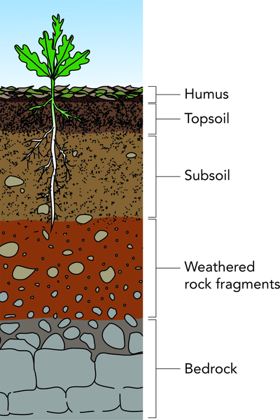 Soil horizons humus composition ph and permability for Information about different types of soil