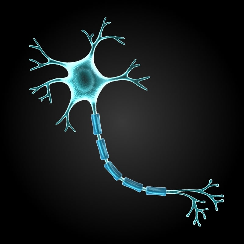 Nerve Cell Diagram Thinglink