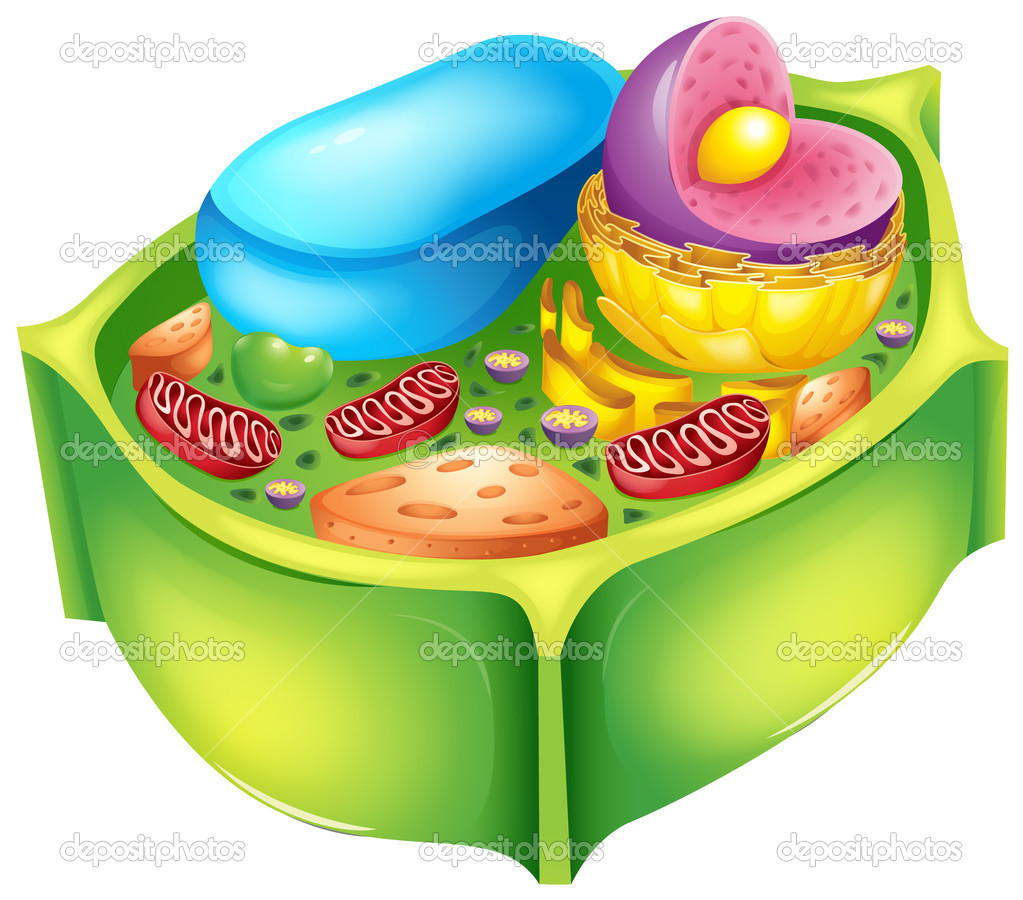 c u00c9lula vegetal thinglink diagram plant cells and animal cells diagram of plant cell wall