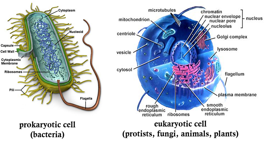 a cell anatomy