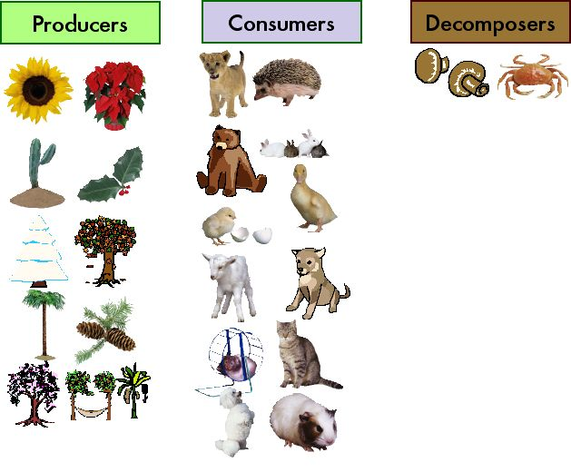 The type of the living organisms according to their feeding.