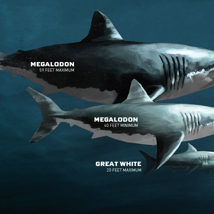 megalodon's size - ThingLink