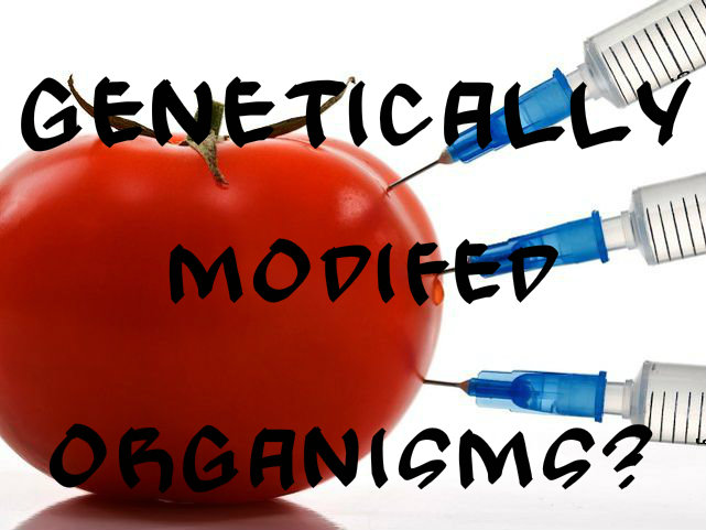 Research paper on gmo