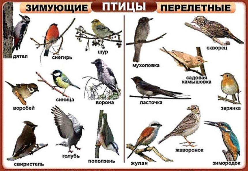 Пауки России: обитатели средней полосы и северного Кавказа