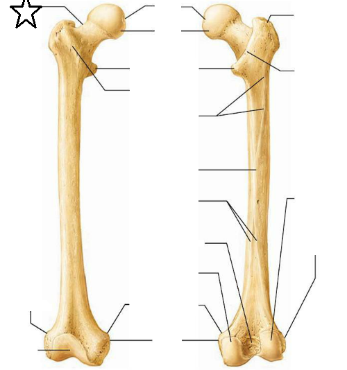 Tibia And Fibula Diagram Unlabeled