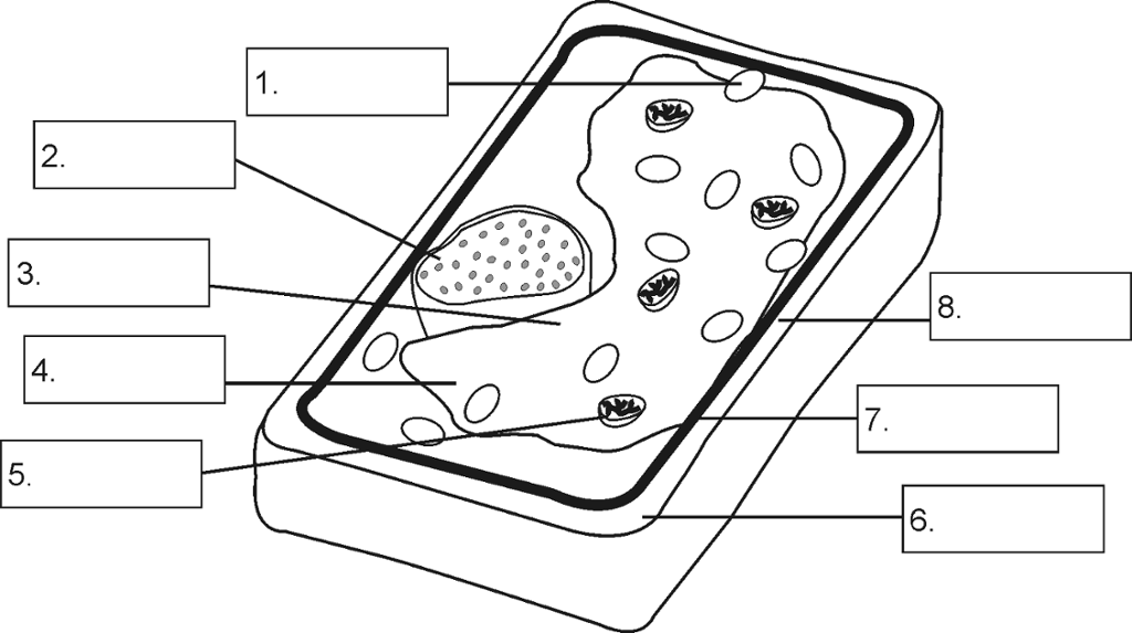 The structure of a plant cell.