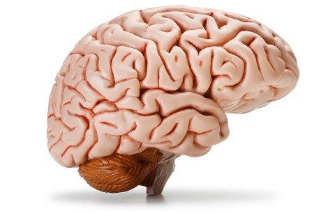 Brain Josh Johnson