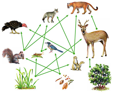 Food Web - ThingLink