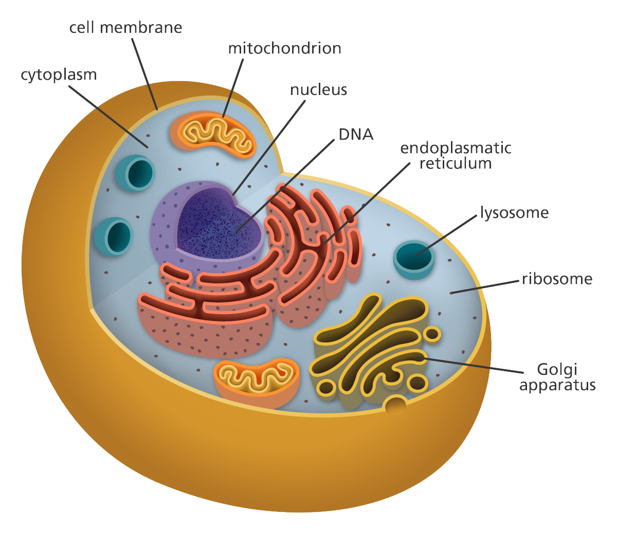 CELL LABELS
