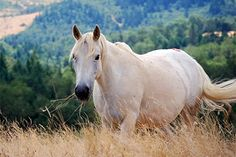 mustang horse info - thinglink