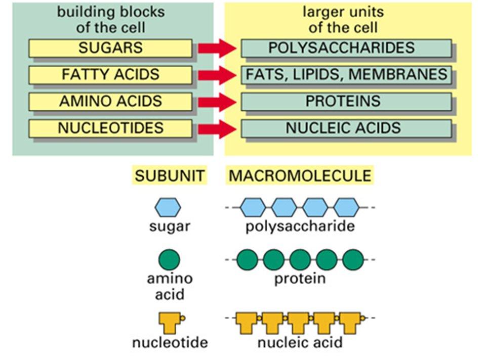 macromolecules are large organic molecules macromolecule thinglink. Black Bedroom Furniture Sets. Home Design Ideas
