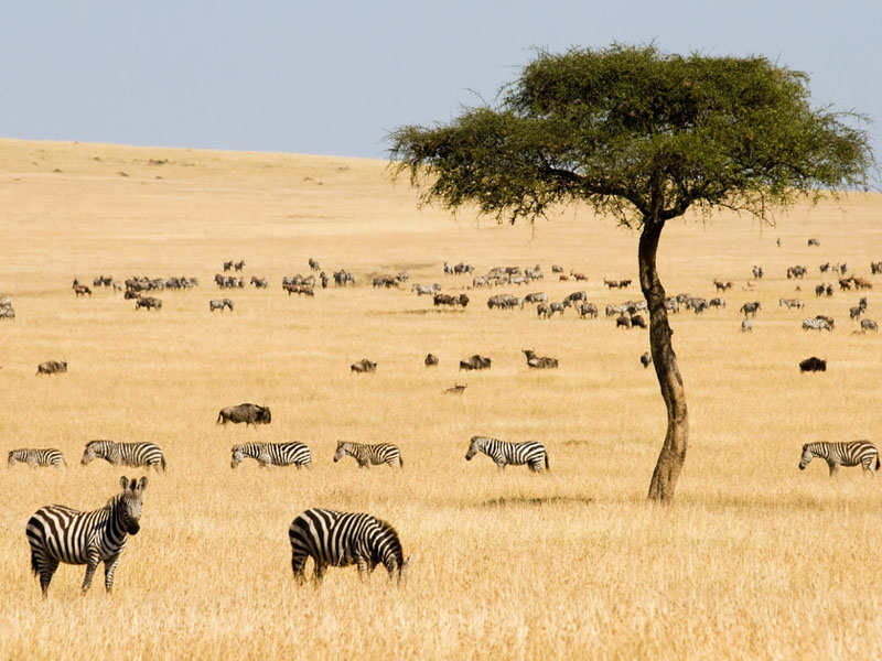 tropical grassland features Tropical grasslands and savannas 6 selected grasslands and savannas 61 africa grasslands are typically defined as lands on which the existing plant cover is.