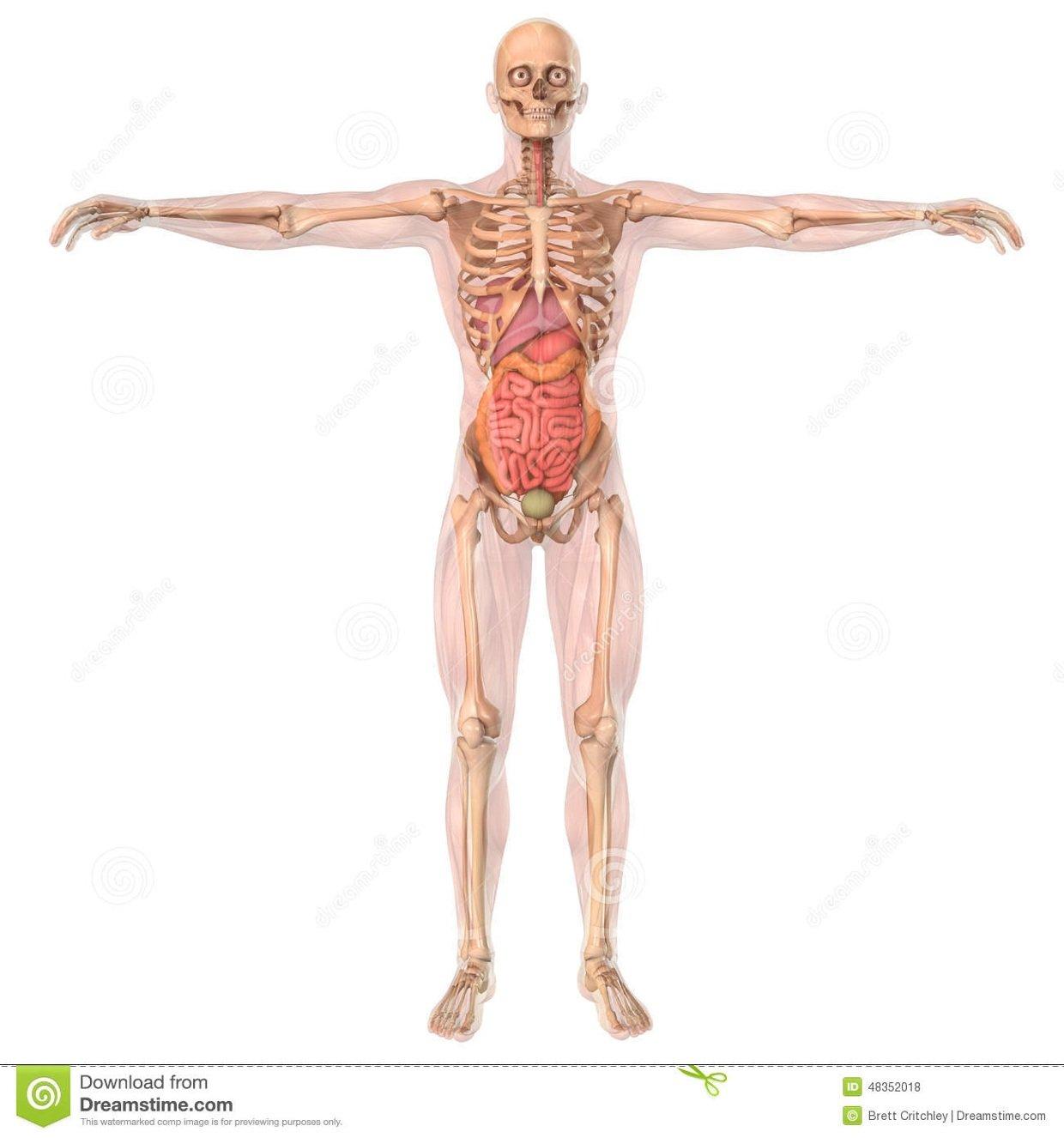 Full Body Labeled Diagram