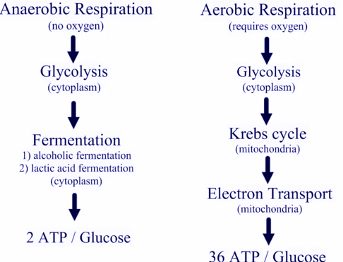 dictionary definition of anaerobic capacity