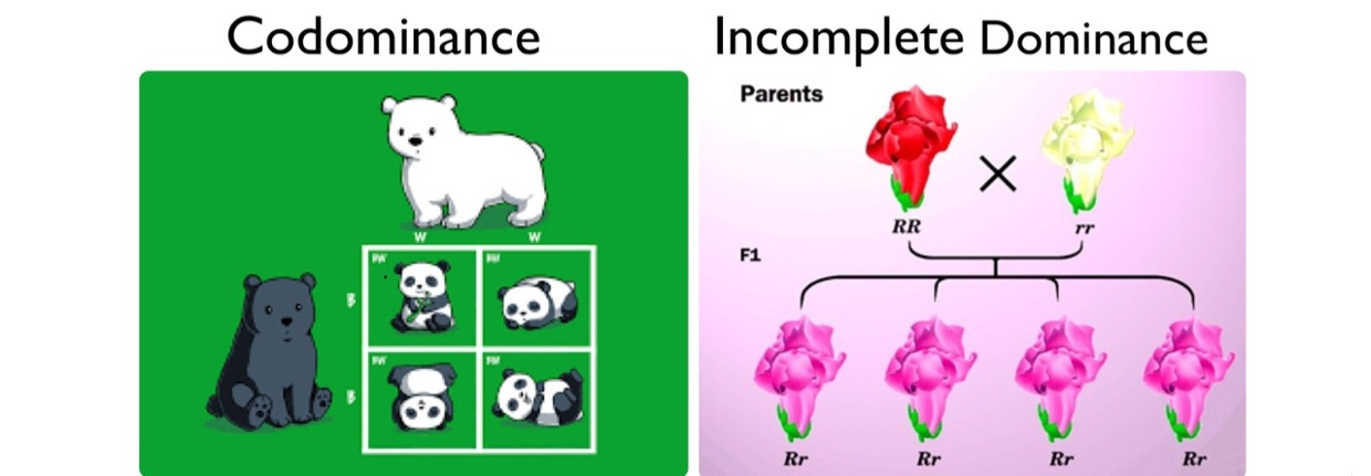 Codominance vs Incomplete Dominance - ThingLink