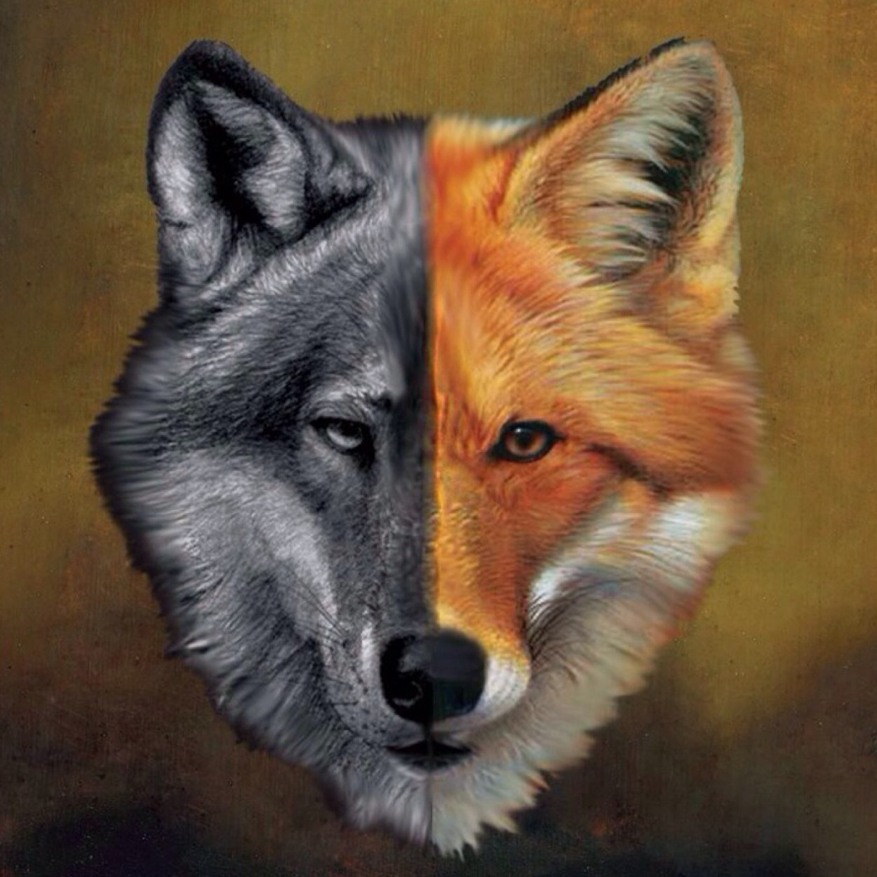 I think foxes are cute and wolves and they are really goo...