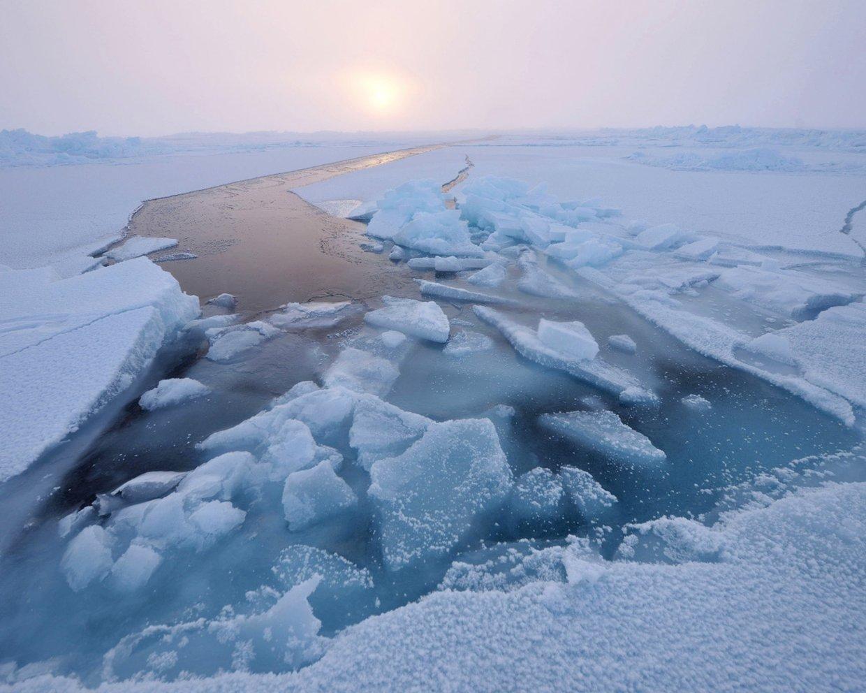 Arctic organisms