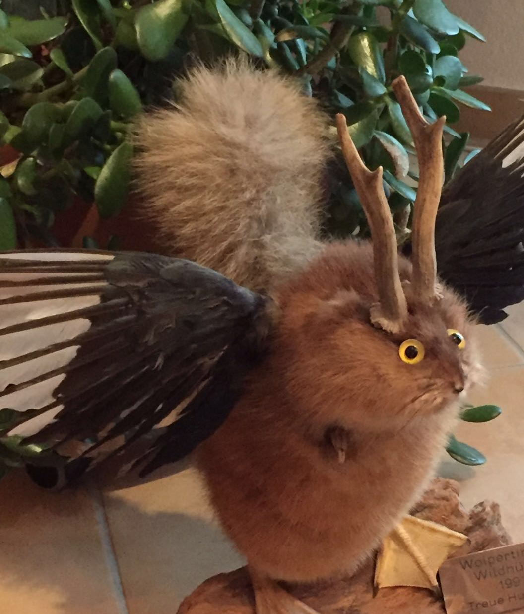 "It's a ""wolpertinger""., It is as big as a hare., Its fur ..."