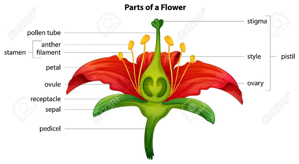 parts of a flowertrevor lima p1