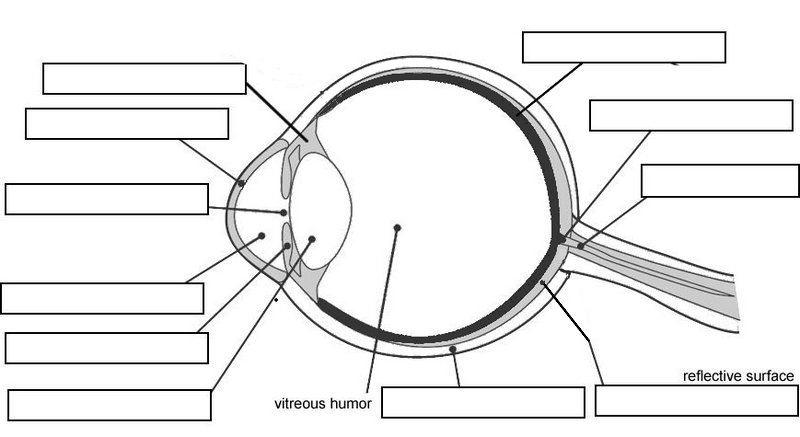 cow eye dissection ThingLink – Sheep Eye Dissection Worksheet