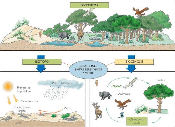 ¿Que é un ecosistema?