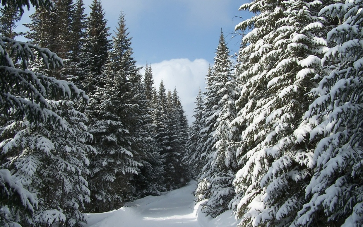 Coniferous Forest Taig...