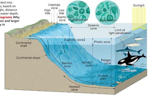The three zones that the ocean is split into for marine for Ocean floor zones diagram