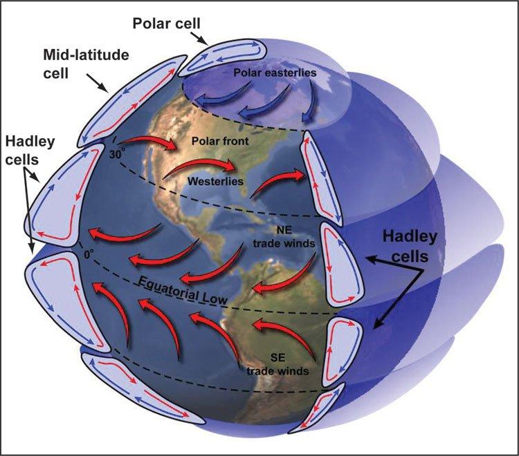 Cell Stream Deutsch
