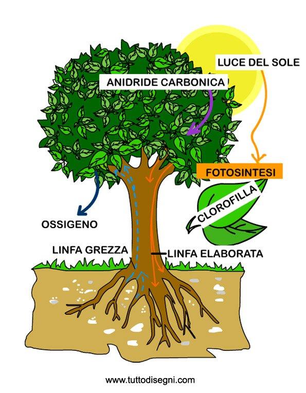 Rino Amico Scienziato Le Piante : Remix of quot come si nutrono le piante la fotosintesi