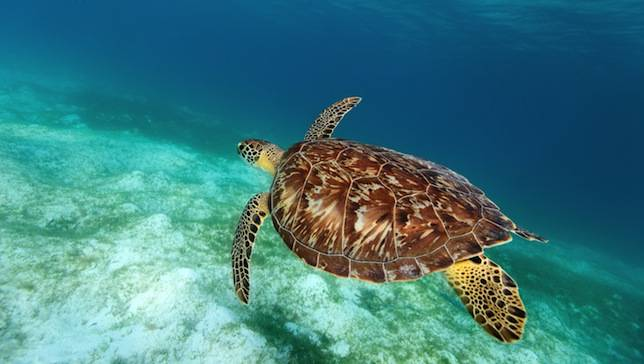 how to become a sea turtle conservationist