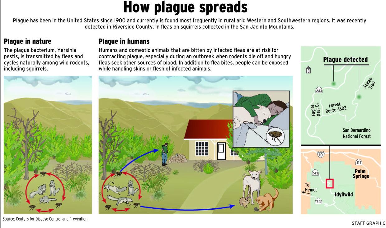 How plague spreads