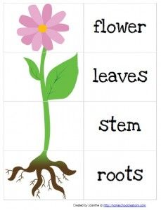 Parts of a Plant Lesson - ThingLink