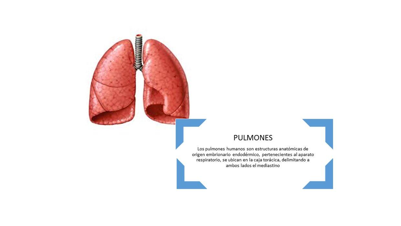 Definición anatomía:, Anatomía + Fisiología, Pruebas de l... - ThingLink