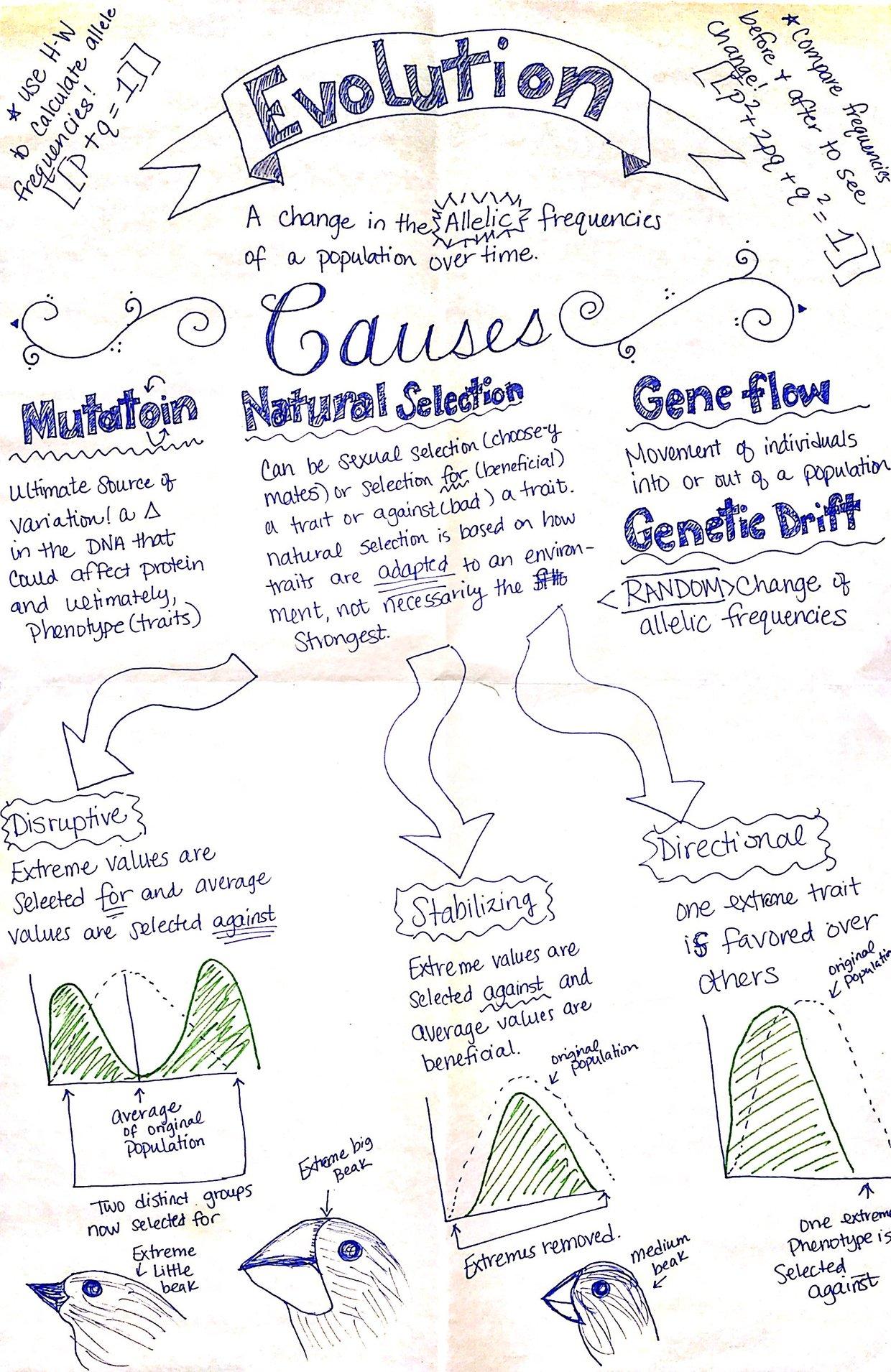 Ap Biology  Natural Selection Video Review Sheet
