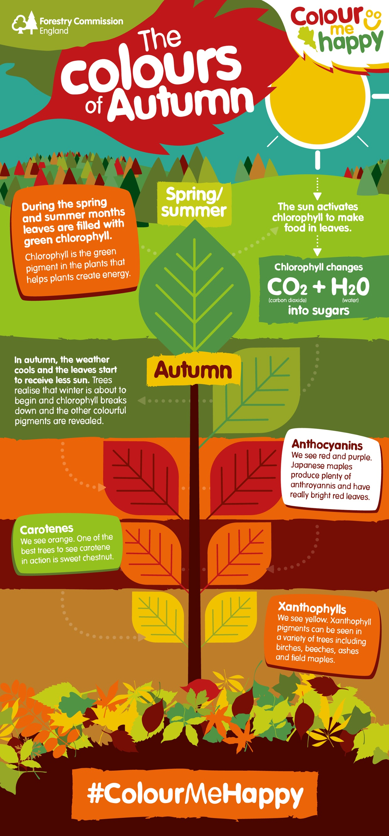 Why do autumn leaves change colour?