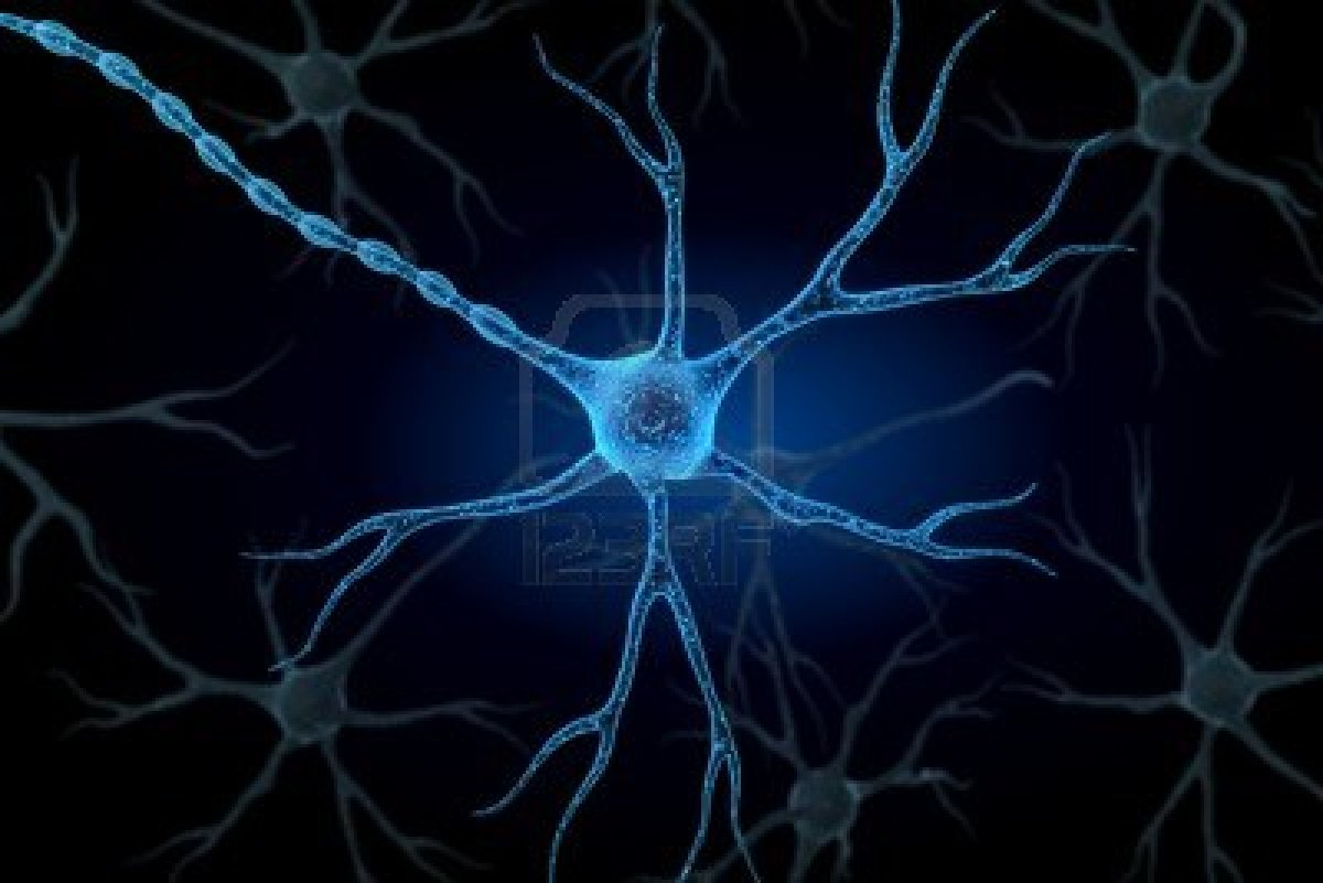 Axon cell body synapse nucleus dendrites - Brain wallpaper 3d ...