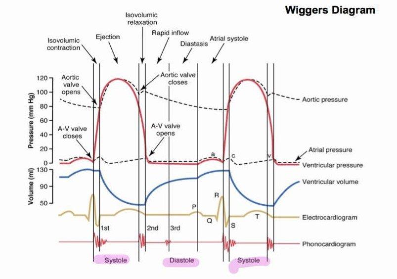 Wiggers Diagram