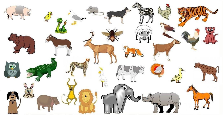 los animales - ThingLink