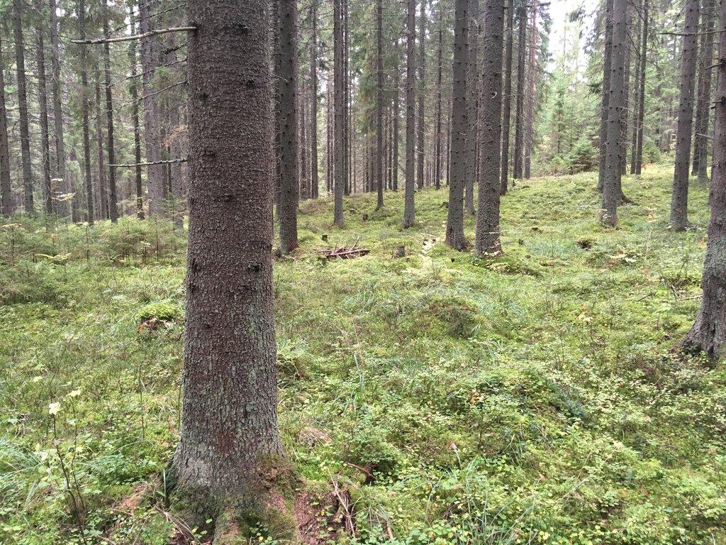 Kangas Metsä