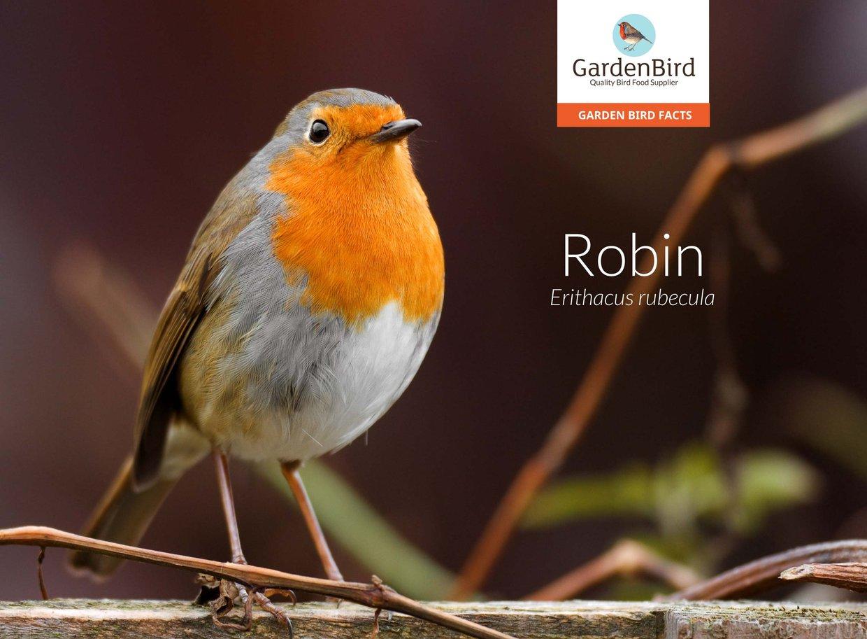 The Robin, Interactive Fact File No.1