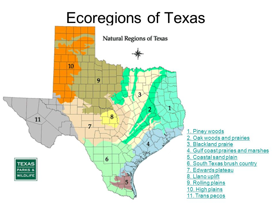 Ecoregions of Texas Notes