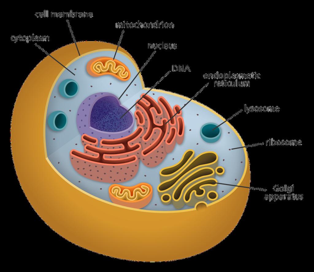 SAO Cell Analogy
