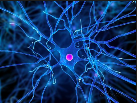 nerve cells Nerve cells are not limited to the brain they exist throughout the central nervous system (cns: including brain and spinal cord) as well as the peripheral nervous.