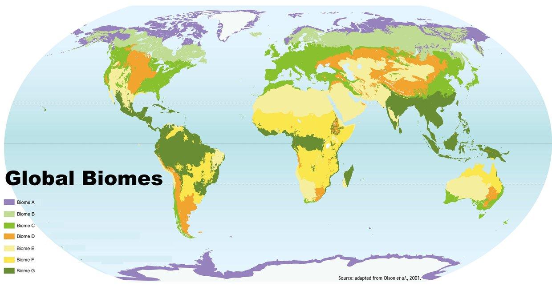 Desert Biome,The Desert Biome is a land with mostly no ra... on desert flowers, desert climate graph, desert wildlife, desert animals, grassland locations map, desert food web, desert climate and weather, temperate desert map, desert eagle, temperate rainforest map, sonoran desert map, desert environment map, desert cactus, desert biomes in north america, sahara desert map, world map, desert fox, desert lizards, desert snakes, desert ecosystem,