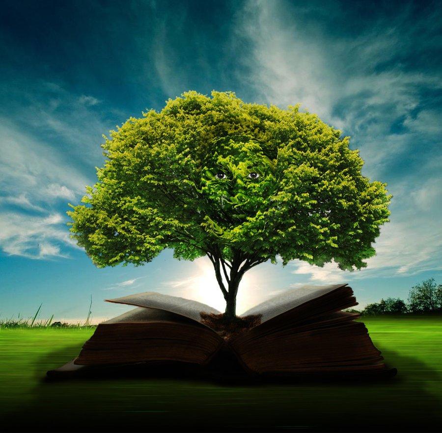 Wisdom And Images: El Árbol De La Sabiduría