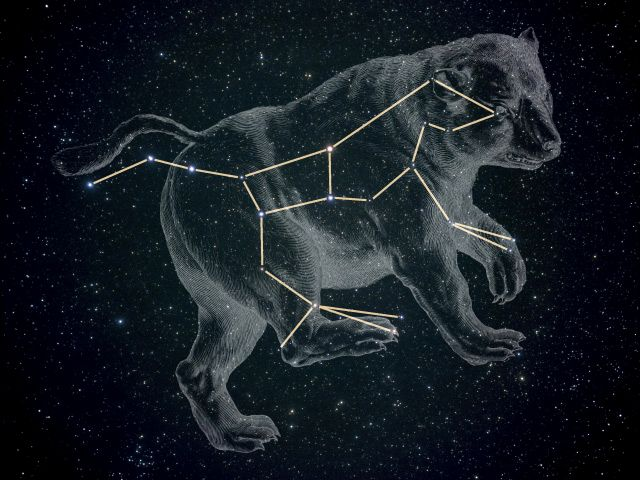 Image result for ursa major